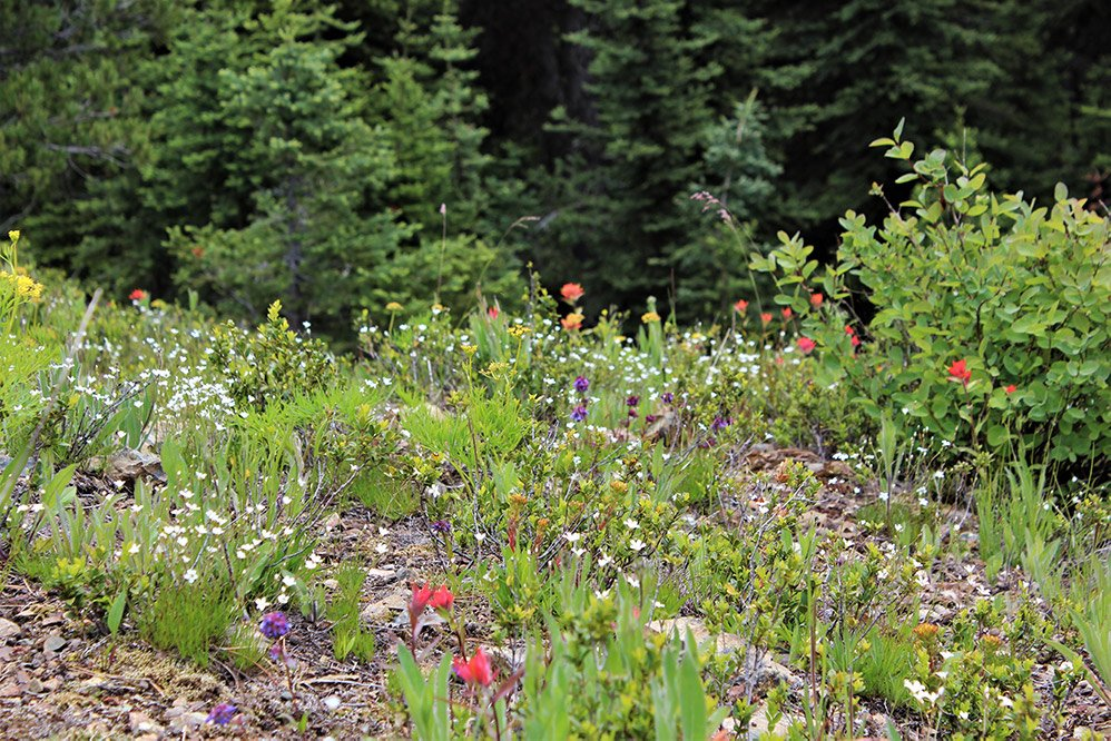 Wildflowers on Windy Joe Trail